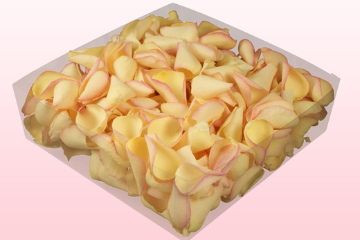 Envase de 2 litros con pétalos de rosa liofilizados de color amarillo-rosa.