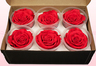 6 Preserved Rose Heads, Fuchsia-White, Size XL