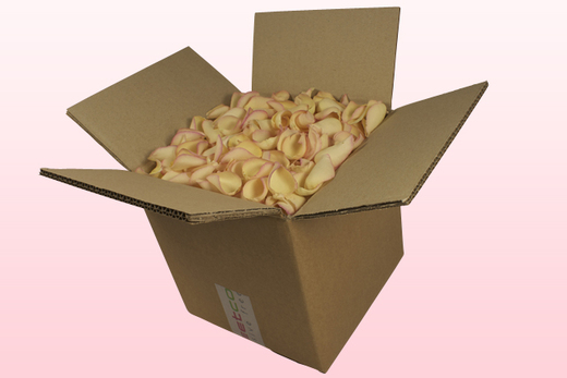 Caja de 8 litros con pétalos de rosa liofilizados de color amarillo-rosa.