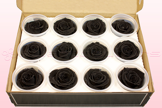 12 Preserved Rose heads, Black, Size M