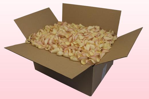 Caja de 24 litros con pétalos de rosa liofilizados de color amarillo-rosa.