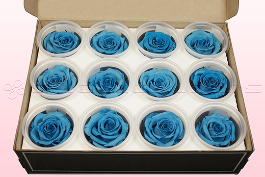 12 Preserved Rose heads, Light Blue, Size M