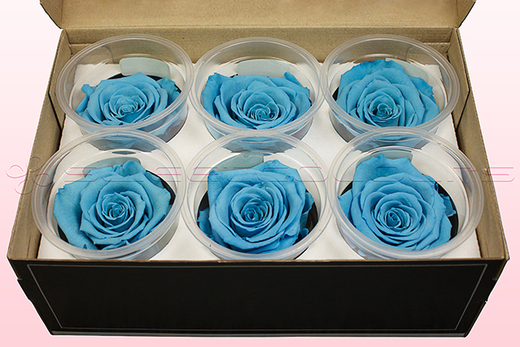 6 Preserved Rose Heads, Light Blue, Size L