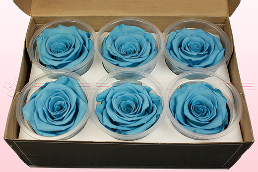 6 Preserved Rose Heads, Light Blue, Size XL