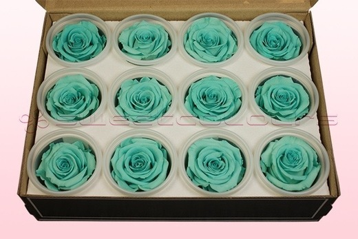 12 Preserved Rose heads, Turquoise, Size M