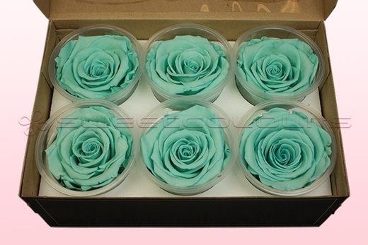 6 Geconserveerde Rozenkoppen, Turquoise, Maat XL