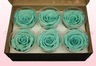 6 Preserved Rose Heads, Turquoise, Size XL