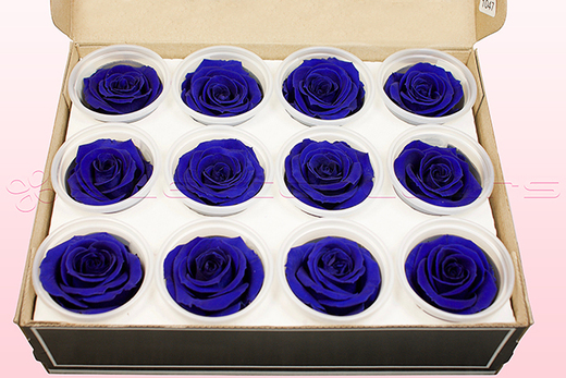 12 Preserved Rose heads, Dark Blue, Size M