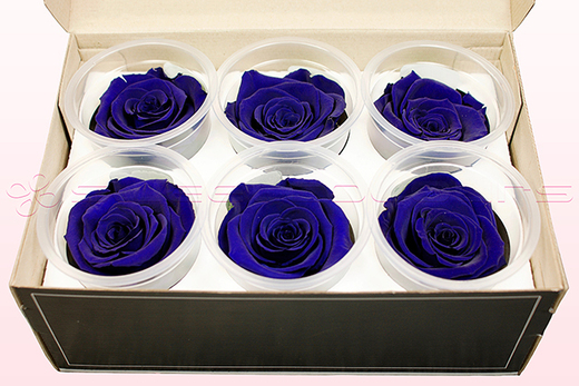 6 Preserved Rose Heads, Dark Blue, Size L