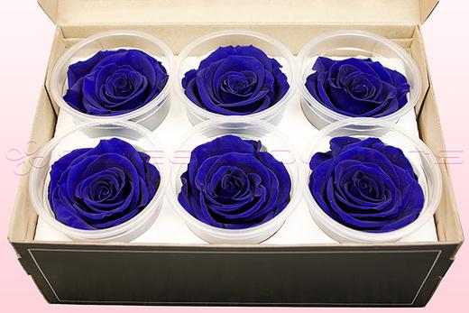 6 Geconserveerde Rozenkoppen, Donkerblauw, Maat XL