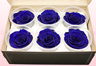 6 Preserved Rose Heads, Dark Blue, Size XL