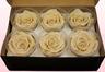 6 Têtes De Roses Conservées, Champagne, Taille XL