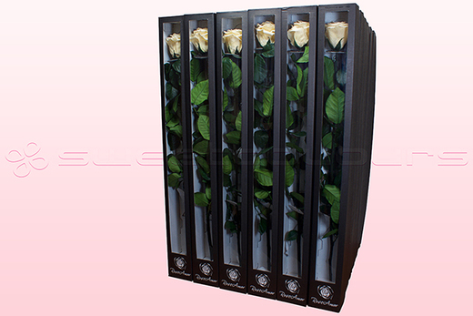 30 Preserved Roses With Stem, Champagne, Size XL.