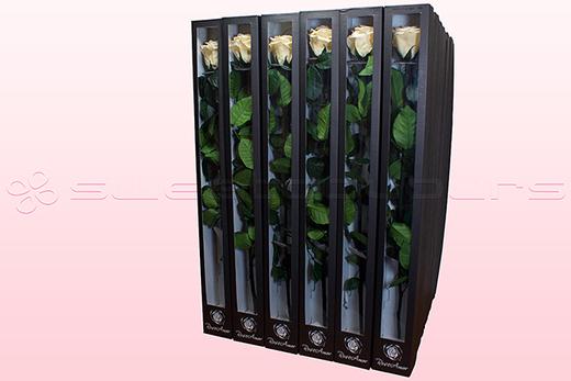 30 Geconserveerde Rosen Met Steel, Champagne, maat XL.