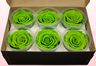 6 Preserved Rose Heads, Light Green, Size XL