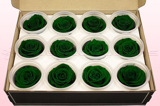 12 Preserved Rose heads, Dark Green, Size M