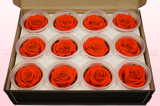 12 Preserved Rose heads, Orange, Size M