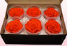 6 Preserved Rose Heads, Orange, Size XL