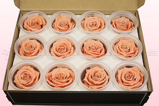 12 Preserved Rose heads, Peach, Size M