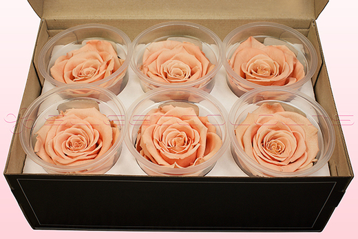 6 Rosas Sin Tallo Preservadas, Melocotón, Tamaño L