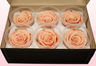 6 Preserved Rose Heads, Peach, Size L