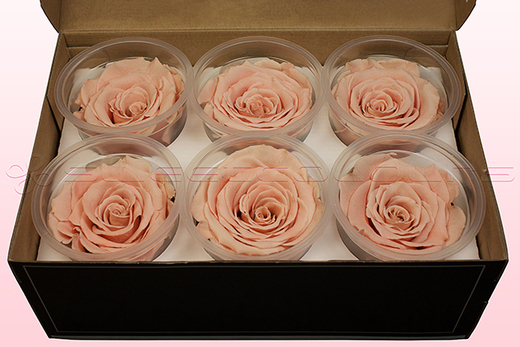 6 Preserved Rose Heads, Peach, Size XL
