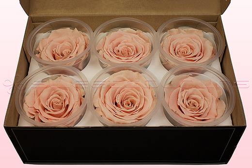 6 Rosas Sin Tallo Preservadas, Melocotón, Tamaño XL