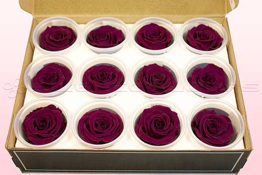 12 Preserved Rose heads, Cerise Pink, Size M