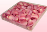 1 litre Box Candy Pink Freeze Dried Rose Petals
