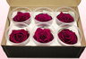 6 Preserved Rose Heads, Cerise Pink, Size L
