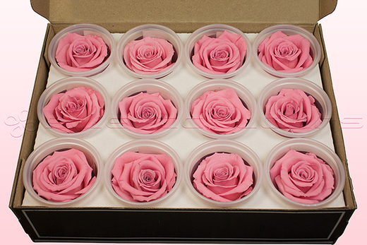 12 Preserved Rose Heads, Light Pink, Size M