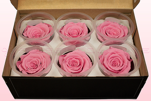 6 Preserved Rose Heads, Light Pink, Size L