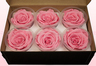 6 Preserved Rose Heads, Light Pink, Size XL
