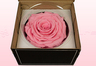 1 Preserved Rose, Light Pink, Size XXL