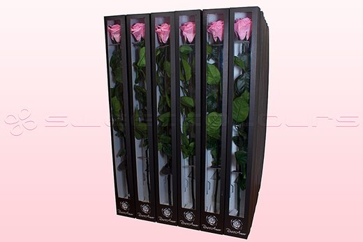 30 Preserved Roses With Stem, Light Pink, Size XL.