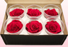 6 Preserved Rose Heads, Cranberry, Size L