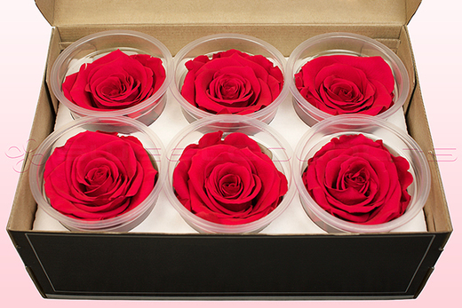 6 Preserved Rose Heads, Cranberry, Size XL