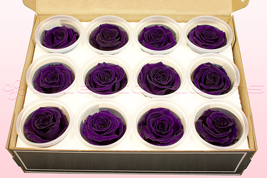 12 Preserved Rose Heads, Purple, Size M