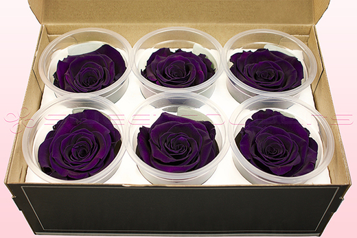 6 Preserved Rose Heads, Purple, Size L