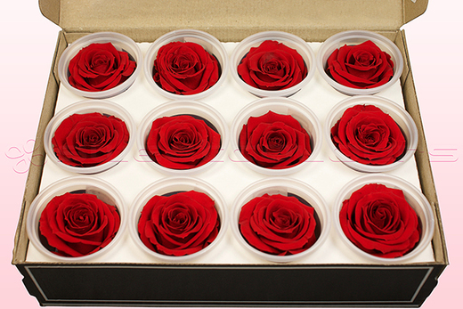 12 Preserved Rose Heads, Red, Size M