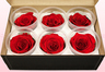 6 Preserved Rose Heads, Red, Size L