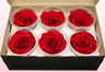 6 Preserved Rose Heads, Red, Size XL