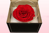 1 Preserved Rose, Red, Size XXL