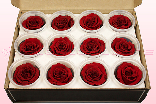12 konservierte Rosenköpfe, Dunkelrot, Größe M
