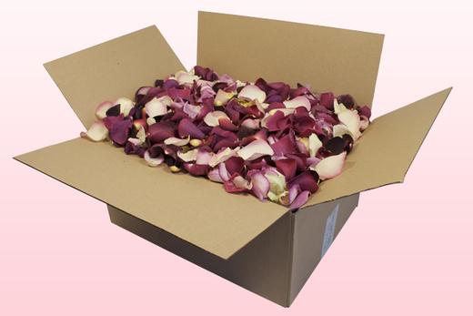 Caja de 24 litros con pétalos de rosa económicos