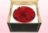 1 konservierte Rose, Dunkelrot, Größe XXL
