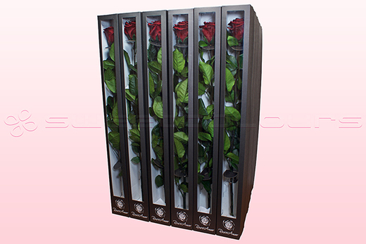 30 Preserved Roses With Stem, Dark Red, Size XL.