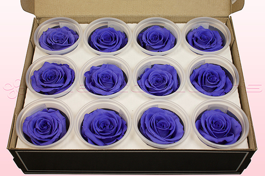 12 Preserved Rose Heads, Lilac, Size M