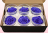 6 Preserved Rose Heads, Lilac, Size L
