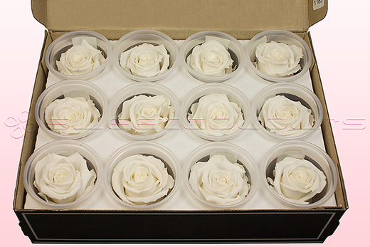 12 Preserved Rose Heads, White, Size M